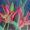 © Elizabeth Burin, Greenland Tulips
