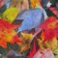 © Elizabeth Burin, Fall Carpet