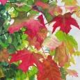 © Elizabeth Burin, Maple Leaves I